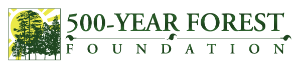 500-Year Forest Foundation