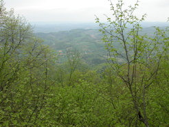 Northern view from the highest point in the forest