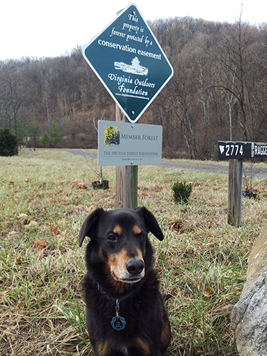 Forest sign and Dog named Uno
