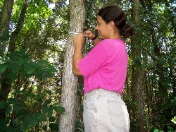 Anna Hess measuring tree diameter