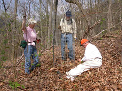 Jean and Hal Kolb standing and Ted Harris sitting setting a wire cage around an oak seedling